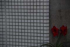 花 その185