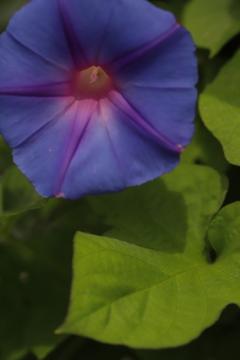 花 その158