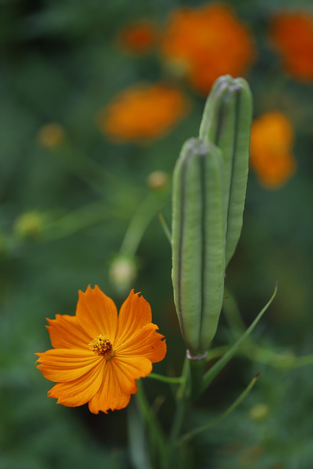 花 その95