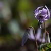 花 その129