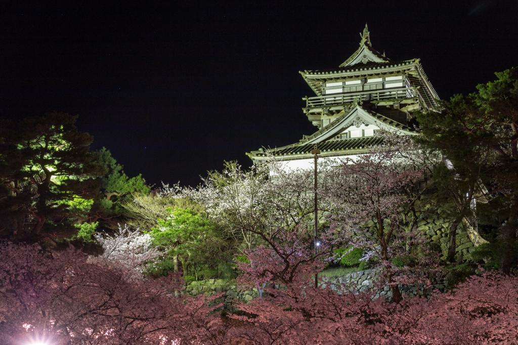 丸岡城の夜桜その1(2016福井の夜桜シリーズ)