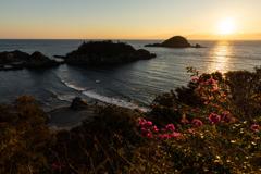 ブーゲンビリアが咲く岬