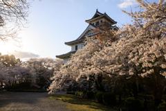 長浜城と夕桜