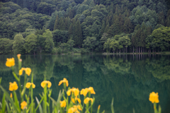 6月の中綱湖