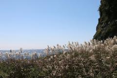 ススキと雄島の海その5(雄島・楽しい時計回り編)