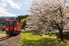 西山光照寺の桜