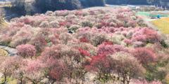 春の花盛り