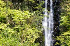 取立山の大滝