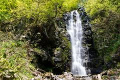 新緑の大滝