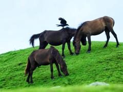 岬の野生馬