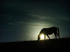 満月の岬馬