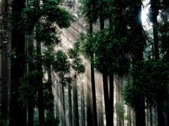 森のシャワー
