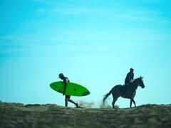 馬とサーファー