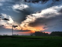 茶畑の朝雲