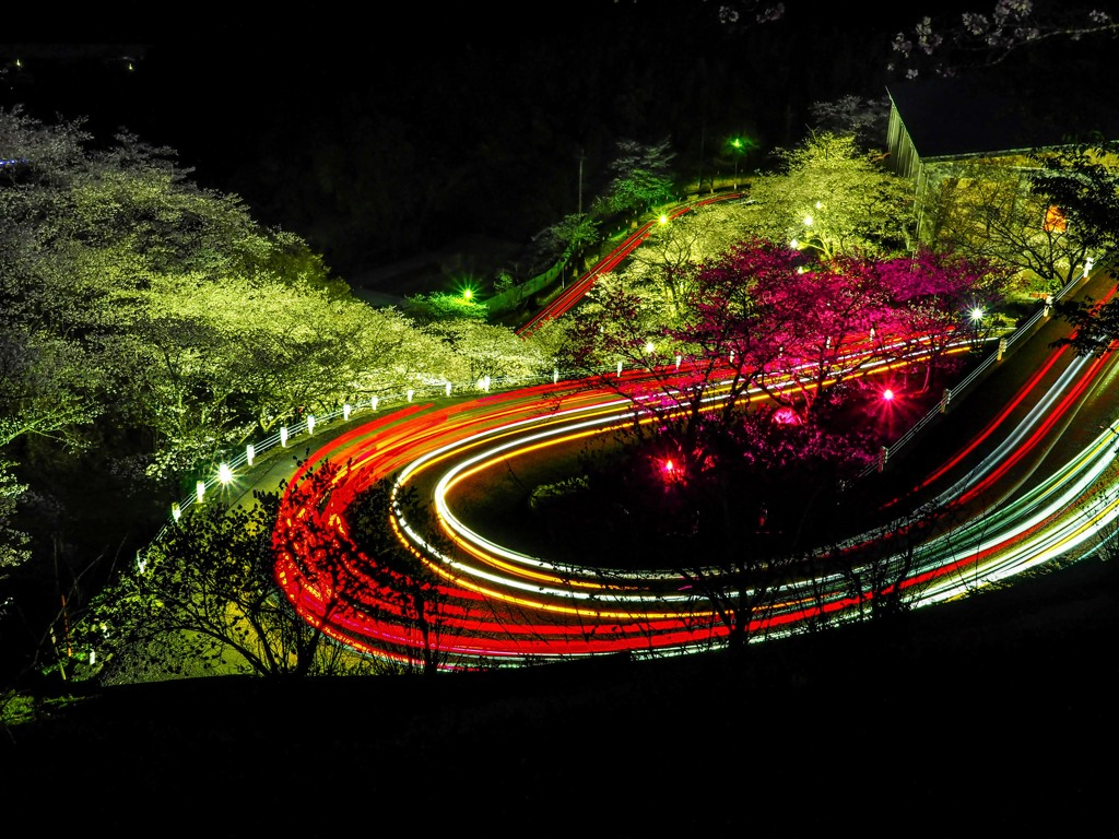 夜桜にヘアピンカーブ