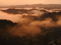迫りくる朝霧