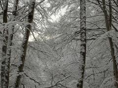 閉ざされた森