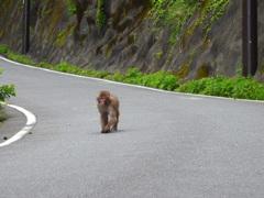 去る時も猿