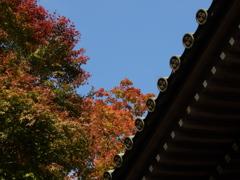 天高く紅葉映える秋