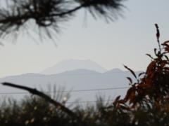 松越しの富士