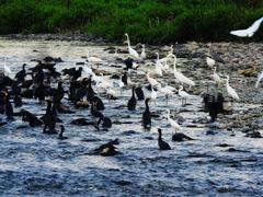 鵜鷺の乱 #7 水際の戦い