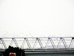 鵜鷺追いし多摩川 #7 風林火山の風