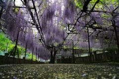 藤山神社にて