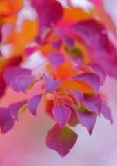 Beauty Leaf