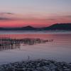 夜明けの牡蠣棚