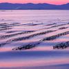 波紋の牡蠣棚