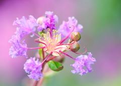 紫光のmagicに憧れて❀