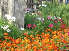 ディズニーシーの花