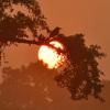 日の出カワセミ1