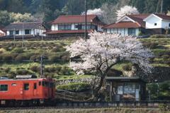 一本桜がある駅