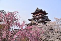 伏見桃山城の春