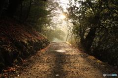 朝の小径を散歩
