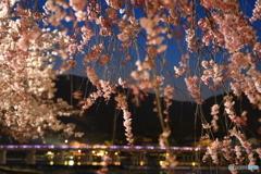 夜桜のすだれ