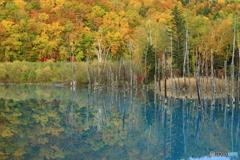 青い池に映り込む紅葉