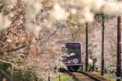 桜の花に囲まれて