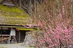 花とかやぶき屋根の家
