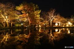 水面に輝く樹々