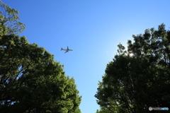 公園から見上げる空