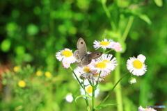 蝶々それとも蛾?