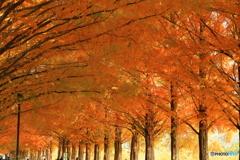 生い茂る紅葉の並木道