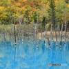 青い池に感動
