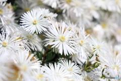 白いお花いっぱい