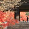 紅葉と三門を撮る