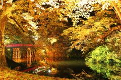 秋の夜の公園