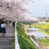 川辺の遊歩道 #2