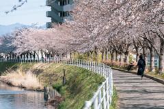 walk alone #桜編